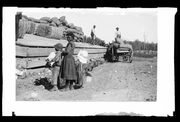 Beeld van een katoenplantage, eind 19de eeuw. Beeld library of congress