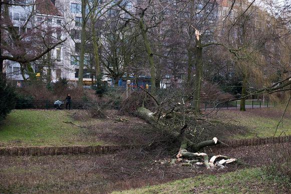 Ook deze omgewaaide boom ligt nog steeds in het Stadspark.