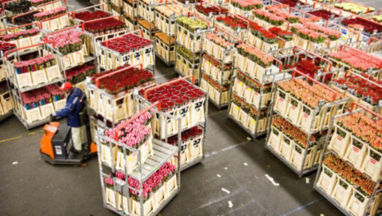 De bloemenveiling in Aalsmeer. Foto ANP Beeld