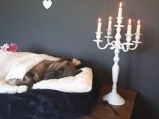 Toch nog waardig afscheid van in Zwolle verdronken hond met vastgebonden poten