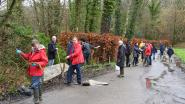 Vrijwilligers zetten meer dan 2.000 bruine kikkers over op de grens van Beersel en Halle