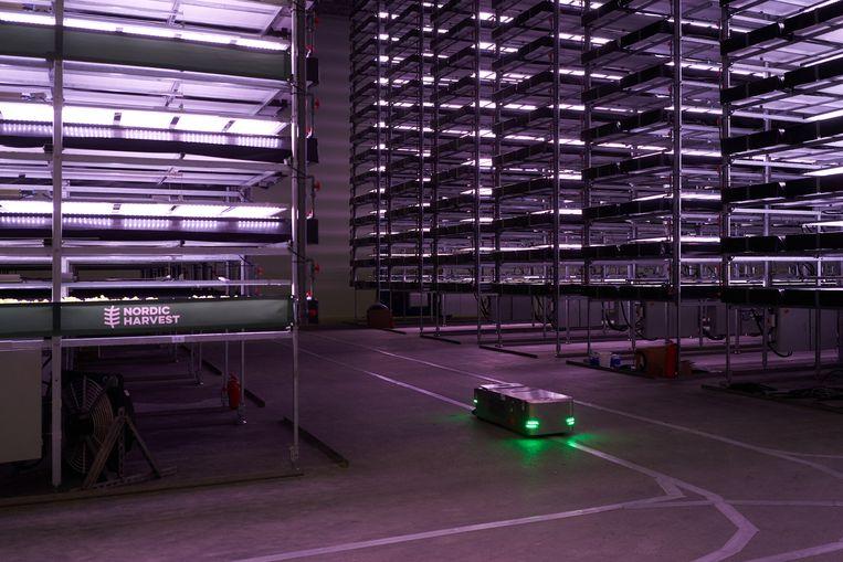Verticale landbouw in Kopenhagen: robots planten de zaadjes en checken of de groenten en kruiden volgens schema groeien. Beeld AFP