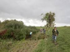 Vrijwilligers zorgen dat Alteklein in Tholen een orchideeënparadijs blijft
