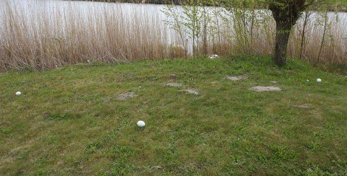 Zwaneneieren in Houten zijn op mysterieuze wijze uit het nest verdwenen.