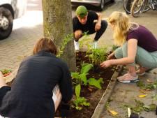 Utrecht wordt opgefleurd: 300 Utrechtse bomen moeten bloementuintjes krijgen