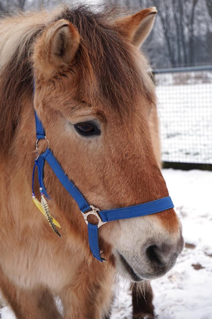 Nelis was altijd vriendelijk en trakteerde iedereen aan het hek graag op een knuffel.