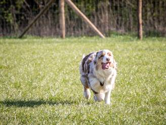 Hondenlosloopweides krijgen eigen reglement