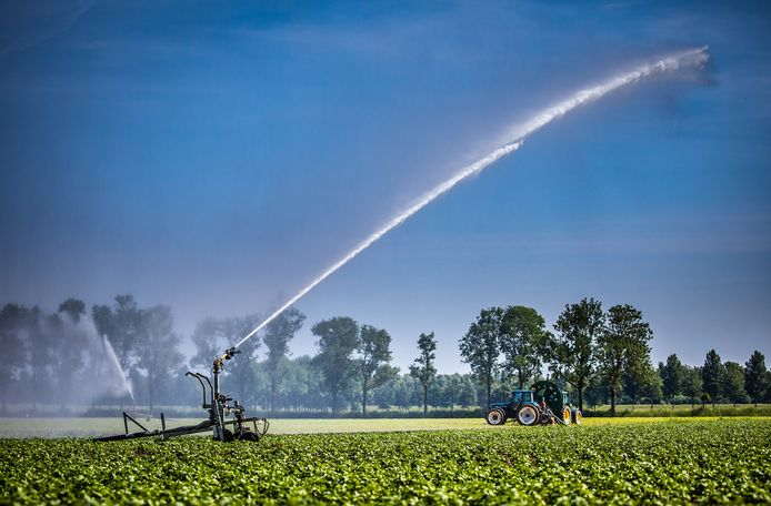 Boeren sproeien hun land aan de Nieuwe Merwedeweg in Dordrecht.
