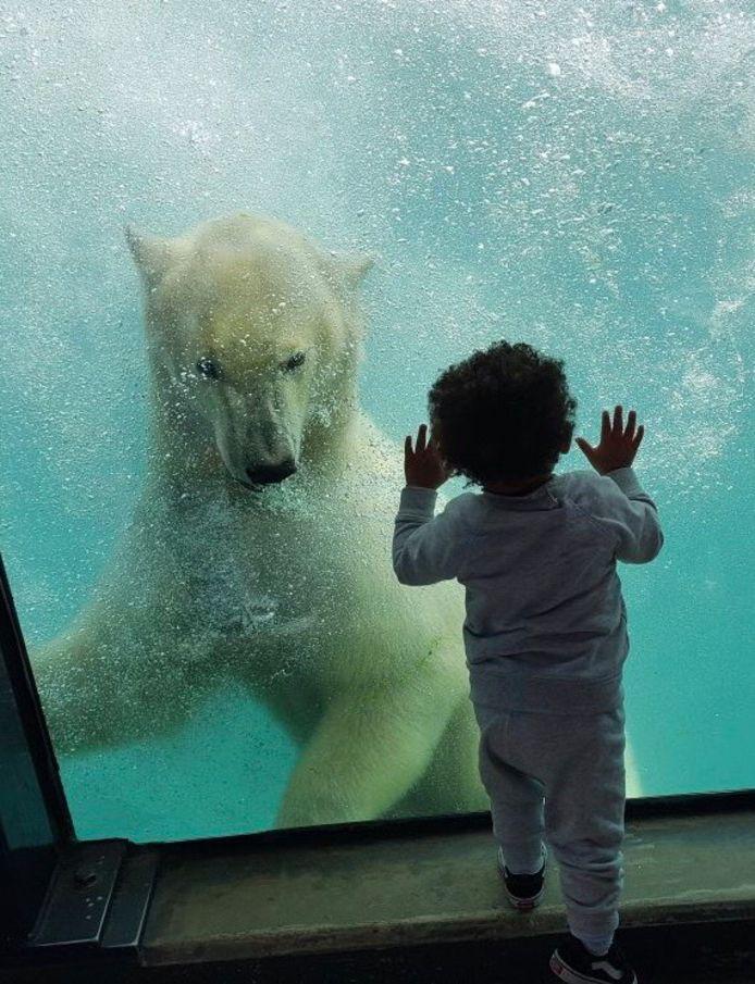 Kleine Feliciano bewondert de grote ijsbeer.