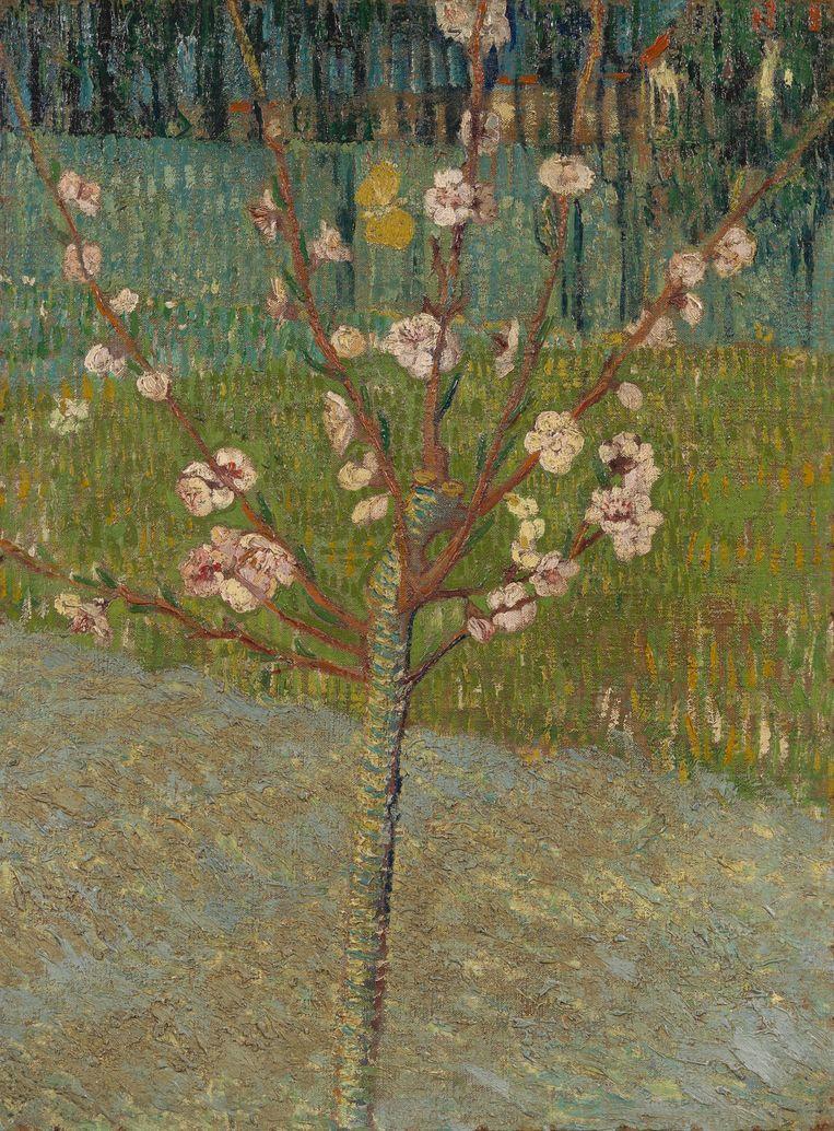 Vincent van Gogh, 1888 Beeld RV
