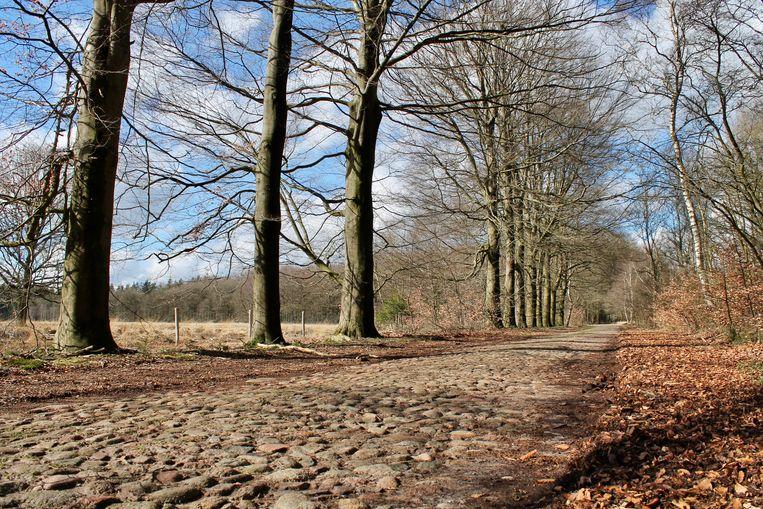 Flintenweg langs het Drouwenerzand. Beeld Van Doorn Flip