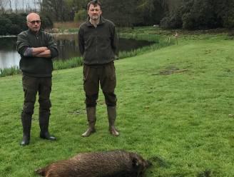 """Na zeven maanden van nachtelijk jagen kunnen jagers eindelijk everzwijnen in natuurgebied schieten: """"Ze brachten grote schade aan in omgeving"""""""