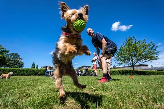Hond Bobby geniet van de vrijheid en het spelen op het nieuwe veldje.