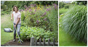 Grassen stellen weinig eisen, en de meeste soorten zijn ijzersterk en heel langlevend. Ze zijn daarom ideaal voor luie tuiniers