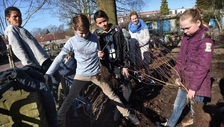 Kinderen van basisschool de Meander in Nijmegen planten bomen op het schoolplein Beeld Marcel van den Bergh