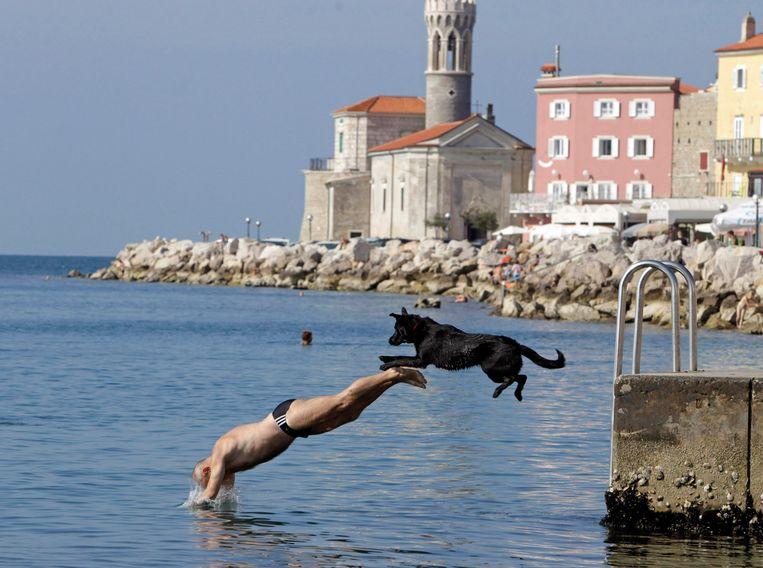 Hond en baasje duiken in zee vanop de kade van Piran in Slovenië Beeld REUTERS