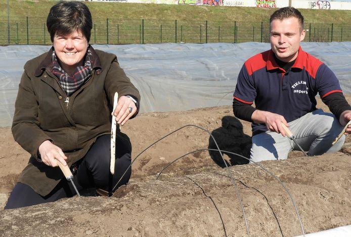 Commissaris van de Koning Ina Adema en Brecht Tielemans steken de eerste asperges uit de volle grond.