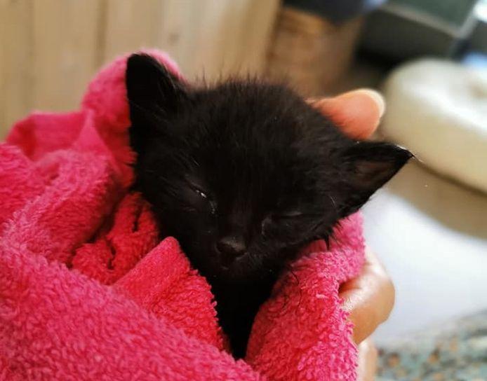 Het katje overleefde dankzij de goede zorgen van Poezencentrale Mol