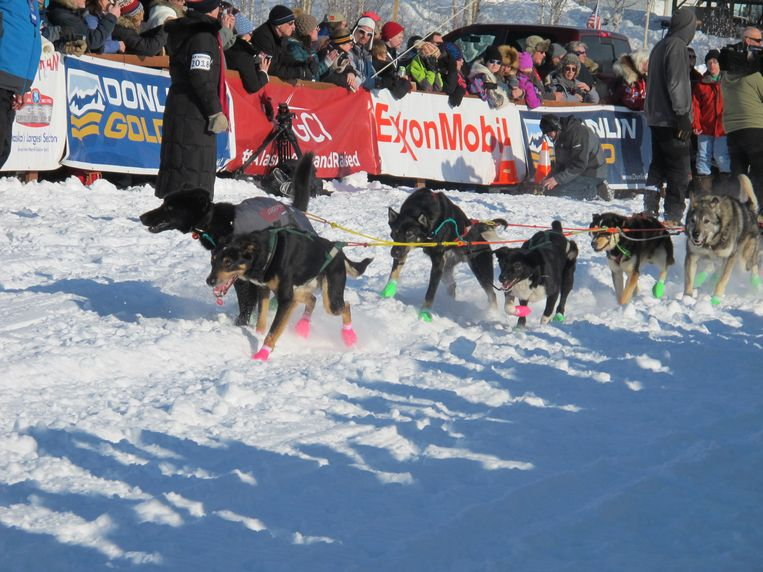 Dogs on the sled dog team of Ryan Redington of Wasilla, Alaska, leave the Iditarod Trail Sled Dog Race starting chute Sunday, March 4, 2018, in Willow, Alaska. The winner is expected in Nome in eight or nine days. (AP Photo/Mark Thiessen) Beeld AP