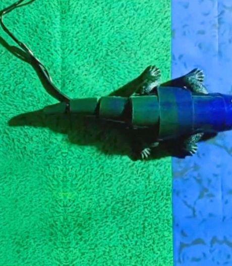 Un robot caméléon capable de changer de couleur instantanément
