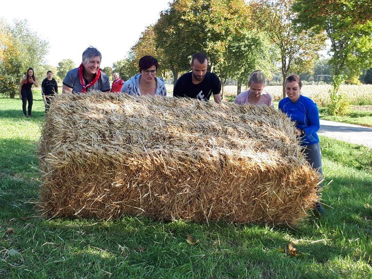 Teambuilding op de boerderij.