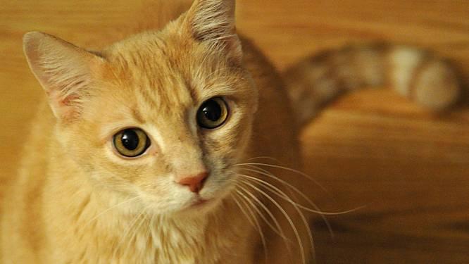 Uw kat ziet u als een reusachtige soortgenoot