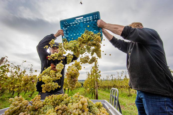 Wijnhoeve De Colonjes in Groesbeek