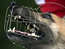 Den Haag wil agressieve honden muilkorven, vóórdat ze bijten
