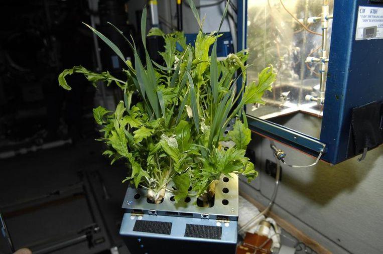 Japanse bladgroenten. Beeld NASA