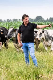 Veestapel moet krimpen, en dat raakt niet alleen de boeren: 'Honderdduizenden mensen verliezen hun baan'