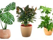 Niet kapot te krijgen: dit zijn de vijf beste planten voor op kantoor