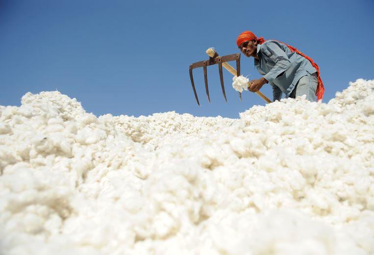 Een Indiër sorteert katoen in Dhrangadhra. Bij de verwerking van grondstoffen voor de textielproductie is sprake van gedwongen arbeid, zeggen Nederlandse onderzoekers. Beeld AFP