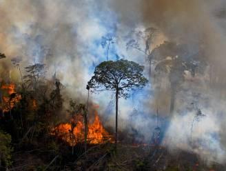 Triest record: 2.308 brandhaarden in Amazonewoud afgelopen maand