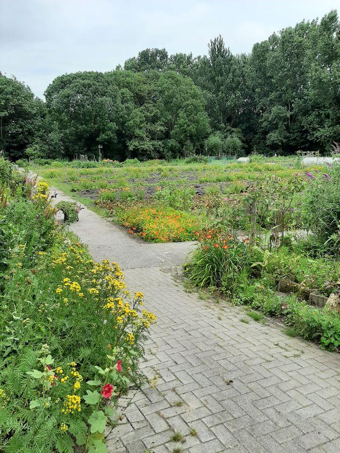 Van courgettes tot bloemen: het wordt allemaal verkocht vanuit de Wijktuin Zegwaartseweg.