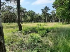 Recreatiepark met 114 houten chalets gepland op flanken van Sallandse Heuvelrug