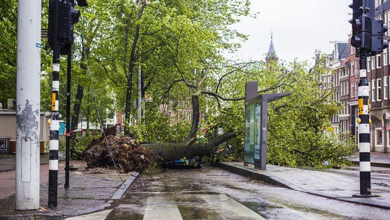 Op de Westermarkt waaiden drie bomen om. Beeld Maarten Brante