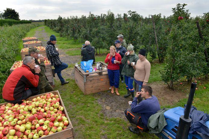 De huisvesting van arbeidsmigranten op het erf mag alleen tijdens het fruitseizoen.
