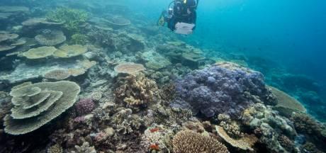 Australisch Great Barrier Reef komt nog niet op lijst van bedreigd werelderfgoed