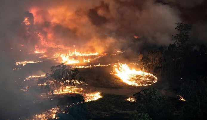 Australië gaat gebukt onder hevige bosbranden.