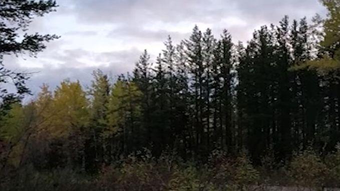 Welk wezen maakt dit angstaanjagende geluid in de wildernis?