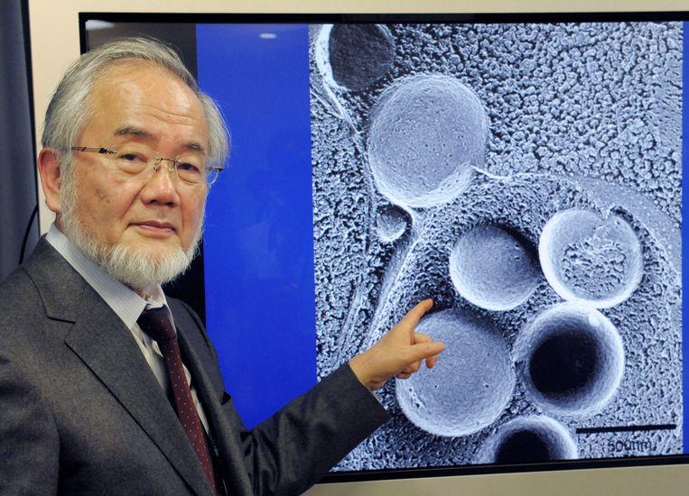 Kersvers Nobelprijswinnaar Yoshinori Ohsumi. Beeld REUTERS