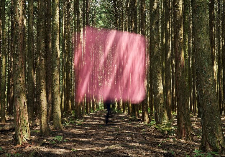 Landscape with a Rose Pink Curtain in the Woods  Beeld Beeld Yoshiki Hase/KANA KAWANISHI GALLERY