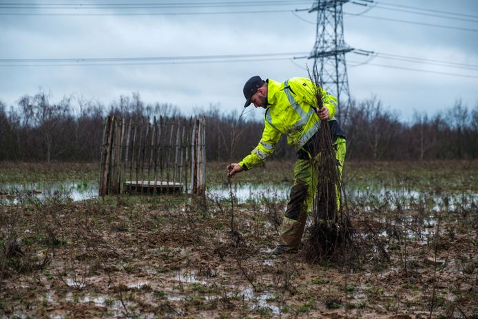 Beeld ter illustratie: In totaal worden er 2,5 voetbalvelden bomen aangeplant.