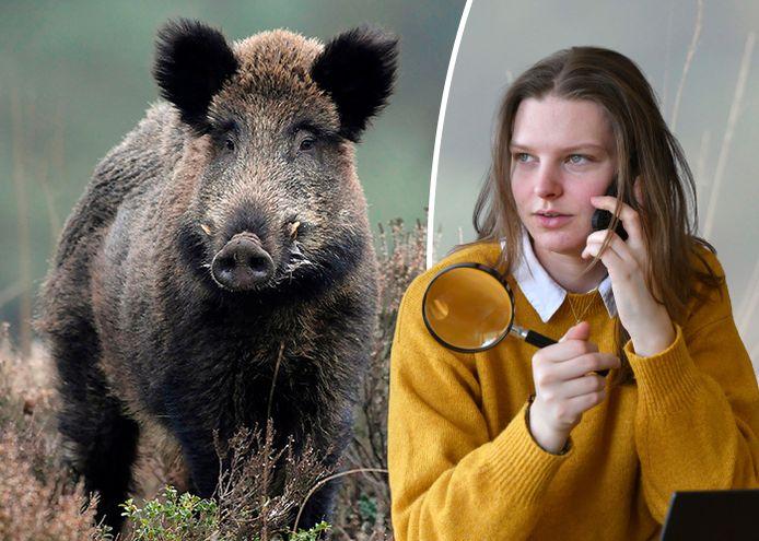 Dominique doet navraag: is aanval van een wild zwijn uniek?