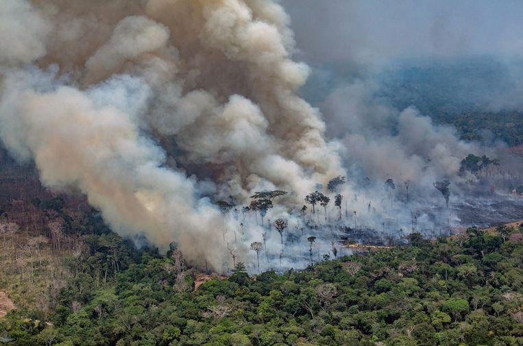 Een luchtfoto van het Amazonegebied in Brazilië, verspreid door Greenpeace. Beeld AFP