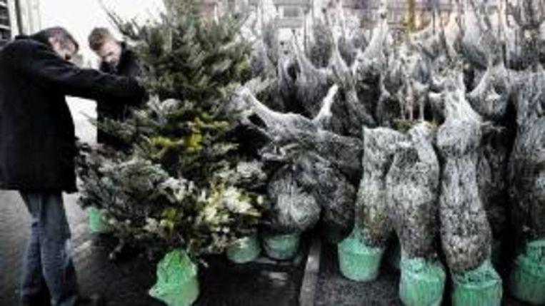 Verzorging Kerstboom.Denk Goed Na Voordat Je Een Kerstboom In De Tuin Plant Trouw