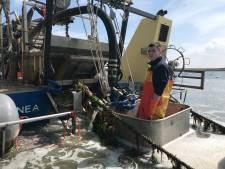 Eerste Zeeuwse mosselen op Neeltje Jans geoogst