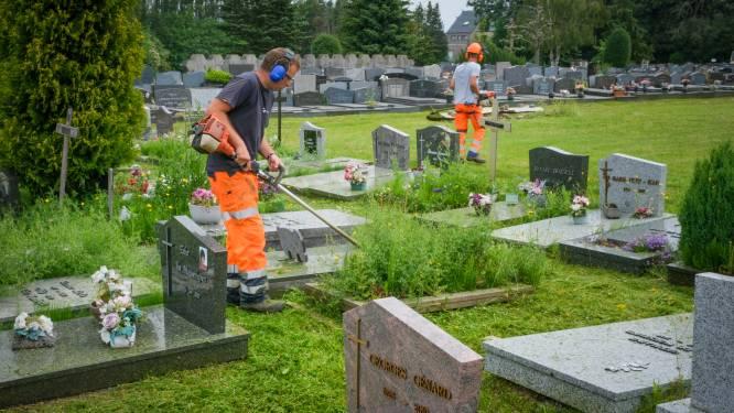 """Na aanhoudende kritiek op overwoekerde graven neemt Grimbergse groendienst kerkhof in Strombeek onder handen: """"We begrijpen de verontwaardiging"""""""
