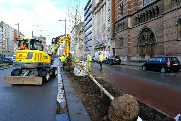 In totaal komen er 540 bomen