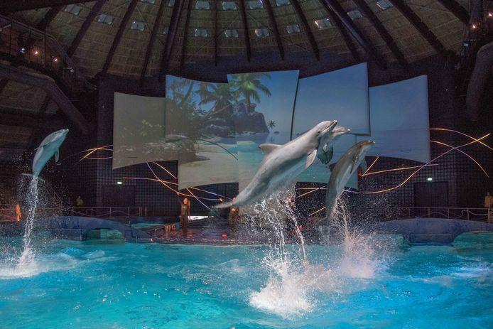 Meerdere verblijven in het Dolfinarium moeten de komende jaren worden vernieuwd. Het bassin in het DolfijndoMijn moet worden verdiept en verruimd en 'zoveel mogelijk een natuurlijke uitstraling hebben, waardoor bezoekers een beeld krijgen van de leefomgeving van de dieren'.